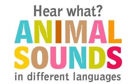 Animal Sounds - ESL Language studies abroad   Vocabulary development for EFL   Scoop.it