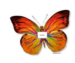 Butterfly mindmap: evaluation english | Kimbwa | Scoop.it