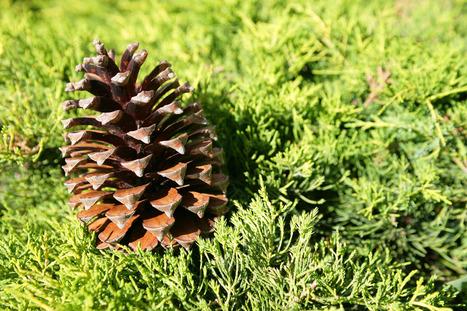 Semaine Développement Durable - 2012 /Appel à projet Alsace   Génération en action   Scoop.it