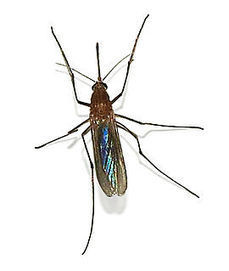 Cities across Texas increase efforts to combat mosquitos - Wikinews   RX News   Articles for Bach RX Twitter Feed   Scoop.it