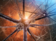 Physicists Find Evidence That The Universe Is A 'Giant Brain' | Science is Cool! | Scoop.it