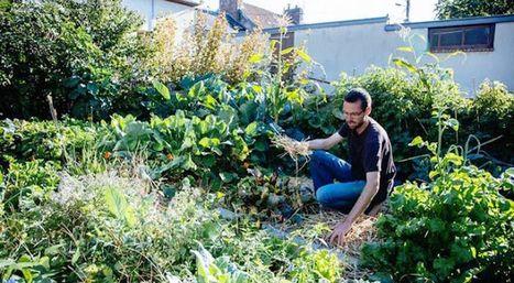 Permaculture urbaine : il cultive et récolte 300 kg de légumes bio dans son potager de 25m² | Jardin écologique | Scoop.it