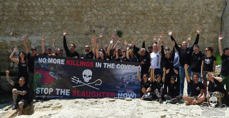 #Champion #Freedivers Join #SeaShepherd to End #Cetacean #Slaughter in the #Coves | Now is the Time to Help our Oceans & it's Species ! | Scoop.it