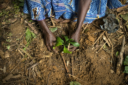 Study: Why planting more trees is always a good idea | Natural Capital | Scoop.it
