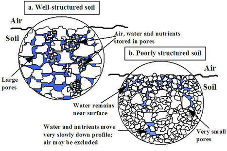 How do the properties of soils affect plant growth - Department of Environment and Primary Industries | Science | Scoop.it