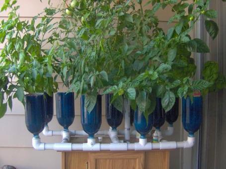 Agricultura en casa | Cultivos Hidropónicos | Scoop.it