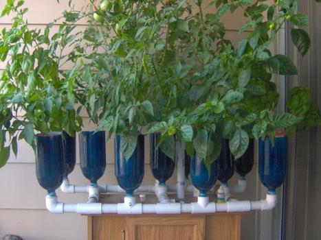 Agricultura en casa cultivos hidrop ni for Jardines verticales panama
