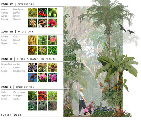 Grow City: Forest Gardens - Mayan and Modern (Edible Gardens in ... | forest gardening | Scoop.it