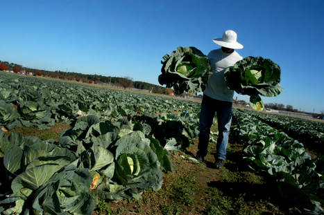Organic farming, carefully done, can be efficient | Los Angeles Times | North Carolina Agriculture | Scoop.it