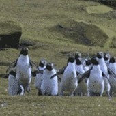 Penguins Chasing a Butterfly | HUMOUR WTF,BUZZ VIDEO & MEMES... | Scoop.it