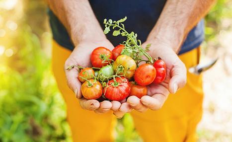 Alimentation : les Consommacteurs Plébiscitent la Permaculture ! [Infographie] | Responsabilité sociale : un devoir | Scoop.it