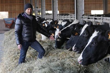 Des vaches nourries à l'herbe et menées au pâturage | Des 4 coins du monde | Scoop.it