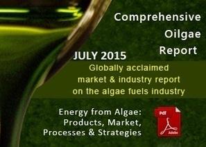 algae plastics - Oilgae Blog | GMOs & FOOD, WATER & SOIL MATTERS | Scoop.it