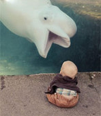 Interesting Photo of the Day: Beluga Whale vs. Baby at the Mystic Aquarium | xposing world of Photography & Design | Scoop.it
