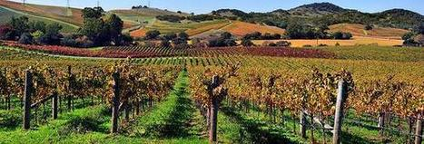 5 key events for the wine industry in 2013 | Autour du vin | Scoop.it
