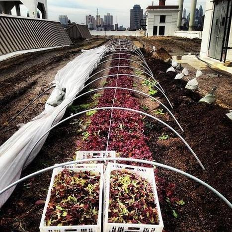 Urban Agriculture as a Vehicle for Social Change | Civic Food Networks | Scoop.it