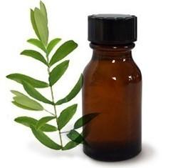 Tea Tree Essential Oil – Pure Tea Tree Oil Wholesale Suppliers and Manufacturers, India | Essential Oil,Avocado Carrier Oil,Basil Essential Oil,Bergamot Essential Oil | Scoop.it