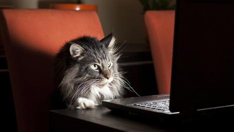The Science Behind Why We Procrastinate | News we like | Scoop.it