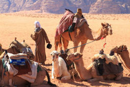 Camels Tapped as Possible MERS Source - MedPage Today | Medical News | Scoop.it