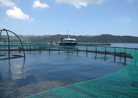 Offshore cage farming has potential in Asia - World Fishing | Aquaculture | Scoop.it