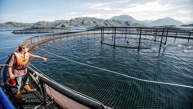Captured carbon to feed farmed fish? | ENVIRONMENTAL FINDINGS THAT MIGHT AMAZE YOU | Scoop.it
