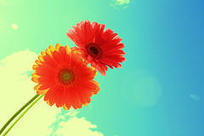 The 10 Best Happiness Quotes   Psychology Today   Positive Psych   Scoop.it
