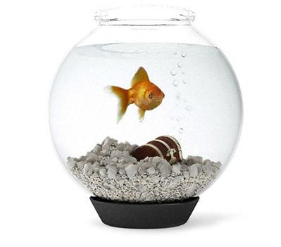 Aquarium poisson rouge 3D | 3D Library | Scoop.it