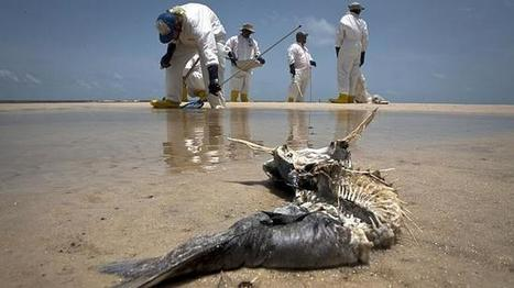 BP eager to avoid 'gross negligence' charge | Messenger for mother Earth | Scoop.it