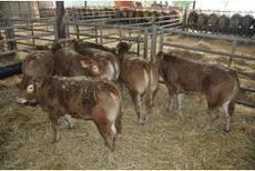 En Dordogne , le veau rosé se construit un nouvel avenir, Bovins viande, Elevage - Pleinchamp | Agriculture en Dordogne | Scoop.it
