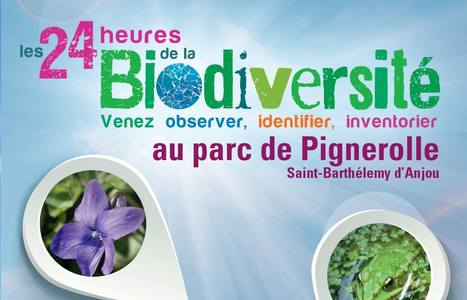 Samedi 28 mai, inspectez les fleurs à la recherche des pollinisateurs ! | Variétés entomologiques | Scoop.it