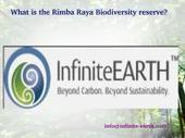 What is the Rimba Raya Biodiversity reserve? | Rimba Raya | Scoop.it