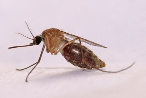 Bacteria on Skin Affects Attractiveness to Mosquitoes | Building coalitions in rethinking growth & development | Scoop.it
