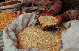 Quinoa: The Dark Side of an Andean Superfood | The Glory of the Garden | Scoop.it