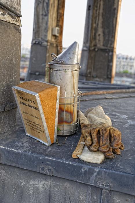 Une dégustation de miel sur les toits de Paris | Paris pepites | Scoop.it