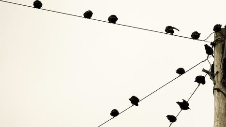 """What Makes an Organization """"Networked""""? 