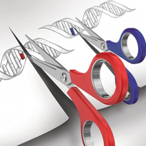Speeding up gene discovery - R & D Magazine | Genetics Genomes Stem Cells Research | Scoop.it