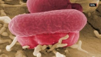Chipotle E. Coli outbreak | Vloasis sci-tech | Scoop.it