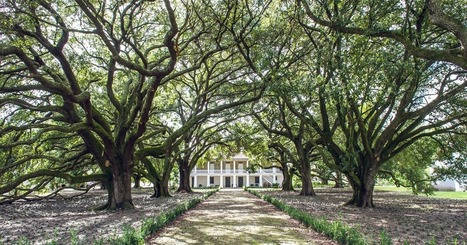 5 Unusual New Orleans Museums You Should Visit | Coastal Restoration | Scoop.it