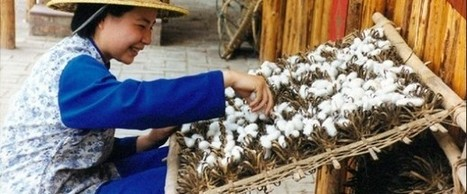HPA2000 Silkworm Farming and Silk Production   World Folklore ...   silk & sericulture   Scoop.it