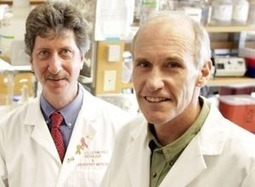 New Study Shows Gene Therapy For HIV Safe After A Decade | Singularity Hub | Longevity science | Scoop.it