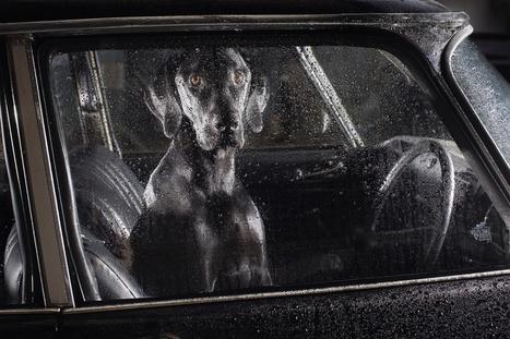 Le silence des chiens dans les voitures | Slate | Actualités Photographie | Scoop.it