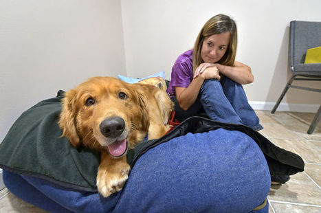 How to comfort your stressed dog during thunderstorms - LancasterOnline | Coffee Puppy Photos, News & Resources | Scoop.it