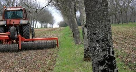 Bénéfices de l'agroforesterie - Impact de l'agroforesterie sur la culture - Terre-net.fr | agro-foresterie | Scoop.it