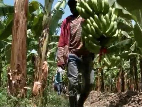 «Le Business du commerce équitable», le docu qui fait déchanter - Rue89 | Equitable & durable | Scoop.it