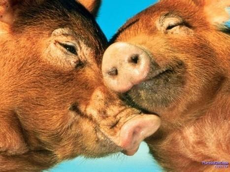 Animali innamorati - La fattoria degli animali innamorati | la  coppia serena - the  happy couple | Scoop.it