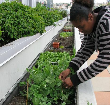 12 consejos para crear tu propio huerto en departamento o casa | Seguridad Laboral  y Medioambiente Sustentables | Scoop.it