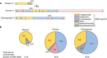 La salute cromosomica del maschio   Med News   Scoop.it