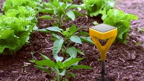 Plants dying? Grass wilting? Find a fix on the web. | Gardening | Scoop.it