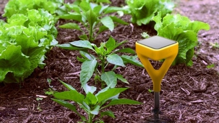 Plants dying? Grass wilting? Find a fix on the web. | Garden apps for mobile devices | Scoop.it