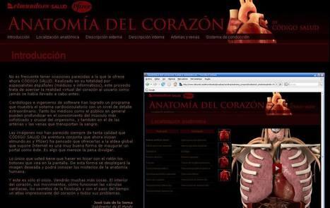 Anatomía del corazón| Salud | elmundo.es | Biología cada día | Scoop.it